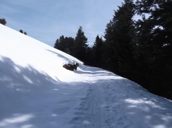Col d'Aspin 8 mars 2015 098